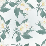 Seamless texture jasmine and buds spring flower vector Stock Images