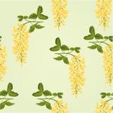 Seamless texture Laburnum branch decorative shrub vector Royalty Free Stock Image