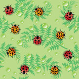 Seamless texture with ladybirds and dew drops Royalty Free Stock Photography