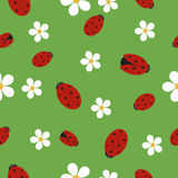 Seamless texture with ladybugs on green grass Stock Images