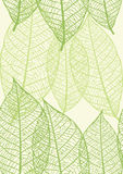 Seamless texture of leaves Stock Photo
