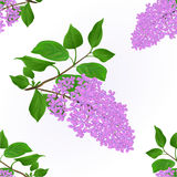 Seamless texture Lilac twig with flowers and leaves vintage natural background vector Royalty Free Stock Photo