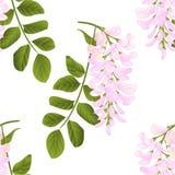 Seamless texture Locust tree vintage vector Royalty Free Stock Image