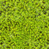 Seamless texture - marsh moss Stock Photos