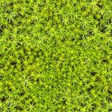 Seamless texture - marsh moss stock photos