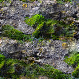 Seamless texture with mold moss and cobwebs Royalty Free Stock Photo