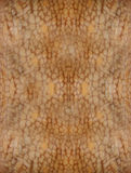 The seamless texture of an octopus Royalty Free Stock Image