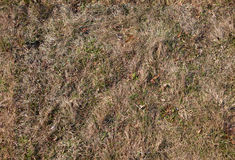Seamless texture of old grass. Seamless detailed texture of old half dry grass, high resolution colour, horizontal image Stock Photo