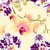 Seamless texture orchids yellow and spotted Phalaenopsis stems with flowers and buds vintage vector illustration editable. Hand draw Stock Images