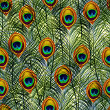 Seamless texture pattern with peacock feathers Stock Photography