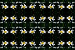 Camomiles on a black background. Seamless texture, pattern, tile, pattern - from a photo - camomiles on a black background Royalty Free Stock Photo