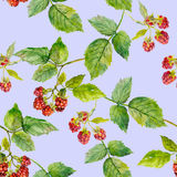 Seamless texture with patterned beautiful raspberry Stock Photo