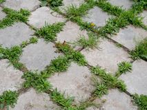 Seamless texture of a paving stone track on a green grass.  stock photography