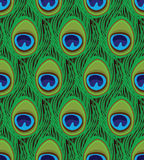 Seamless texture of peacock feathers. Vector illustration Stock Photography