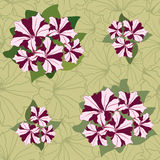Seamless texture with petunia flowers Royalty Free Stock Photos