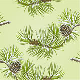 Seamless texture Pine branch with pine cone vector Stock Photos