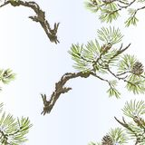 Seamless texture pine branches and cones needles and snow vintage vector botanical illustration for design editable. Hand draw Royalty Free Stock Images