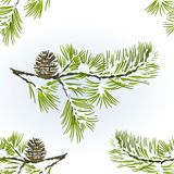 Seamless texture pine tree and pine cone branch winter snowy natural background vitage vector illustration editable. Hand draw stock illustration