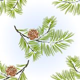 Seamless texture Pine tree and pine cones branch. Seamless texture Pine tree and pine cones branch  winter snowy natural background vector illustration Royalty Free Stock Image