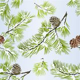 Seamless texture pine tree and pine cones branches winter snowy  natural background vitage vector illustration editable. Hand draw Royalty Free Stock Image