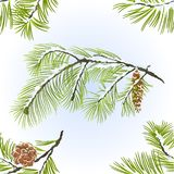 Seamless texture Pine trees and pine cones branches winter snowy natural background vintage vector illustration editable. Hand draw Stock Photos
