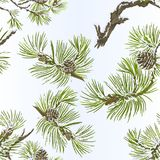 Seamless texture pine various branches and cones needles and snow vintage vector botanical illustration for design editable. Hand draw Stock Photography