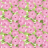 Seamless texture with pink flower Stock Images