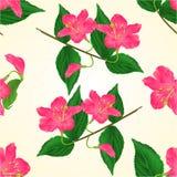 Seamless texture pink flower decorative shrub Weigela cracks vintage vector Royalty Free Stock Photography