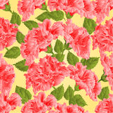 Seamless texture pink hibiscus vector Royalty Free Stock Photography