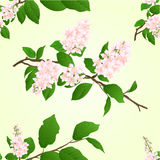 Seamless texture pink lilac branch vector Royalty Free Stock Image
