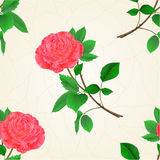 Seamless texture pink rose flower twig with leaves  vintage vector Royalty Free Stock Images