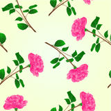 Seamless texture pink rose stem vector. Seamless texture pink rose stem with leaves and blossoms vector illustration Stock Photography