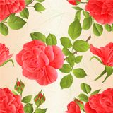 Seamless texture Pink roses with buds and leaves vintage nature background vector illustration editable Stock Image