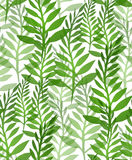 Seamless texture with plants and ferns. Vector background for your design Stock Image