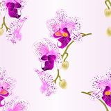 Seamless texture  purple and white orchid stem  Phalaenopsis beautiful flower  vintage vector closeup illustration editable Stock Photos