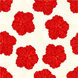 Seamless texture red hibiscus flower  polygons vector Stock Photography