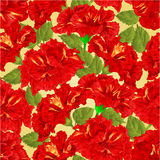 Seamless texture red hibiscus vector Royalty Free Stock Image