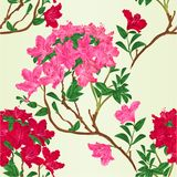Seamless texture red and pink rhododendron branch mountain shrub vintage vector botanical illustration. Hand draw stock illustration