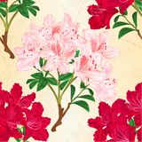 Seamless texture red and pink rhododendrons branches mountain shrub vintage vector botanical illustration editable. Hand draw Royalty Free Stock Photography