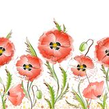 Seamless Texture with Red Poppy Flowers Royalty Free Stock Image