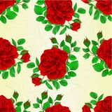 Seamless texture red rose with buds and leaves vintage  Festive background vector illustration. Editable hand draw Stock Images