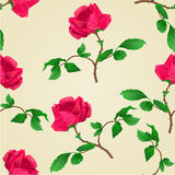 Seamless texture Red rose vintage vector. Seamless texture Red rose stem with leaves and blossoms vintage vector illustration Stock Images