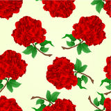 Seamless texture red roses stem vector vintage Stock Photography