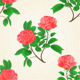 Seamless texture roses flower pink twig with leaves nature background vintage hand draw vector Royalty Free Stock Images