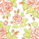Seamless texture of roses Royalty Free Stock Images