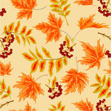 Seamless texture rowanberry and maple leaves autumn vector Royalty Free Stock Images
