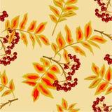 Seamless texture rowanberry vector Stock Photography