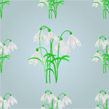 Seamless texture snowdrops spring background vector Stock Photo