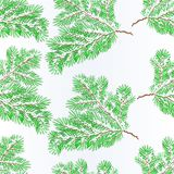 Seamless texture spruce branch lush conifer winter snowy natural background vector illustration editable. Hand draw Stock Photos