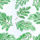 Seamless texture Spruce branches lush conifer winter snowy natural background vector illustration editable. Hand draw Stock Photography
